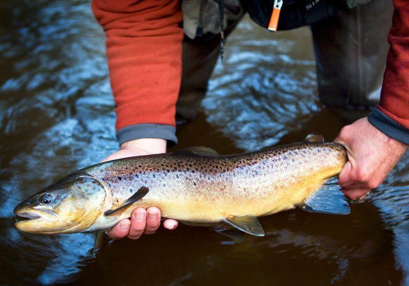 Brule River Brown