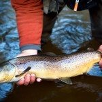 Bois Brule River Brown